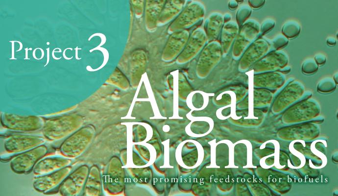 Project3 藻類バイオマスエネル...